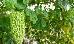 """夏天最应该吃的4种蔬果,天然""""玻尿酸"""",每周吃3次,排毒美白"""